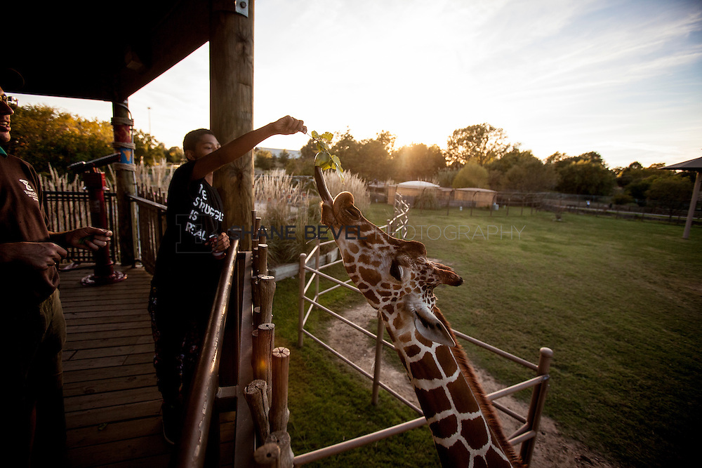 10/8/16 6:21:02 PM --  SFHS All-Employee Safari at the Tulsa Zoo. <br /> <br /> Photo by Shane Bevel