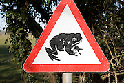 Red triangular road sign of frog or toad