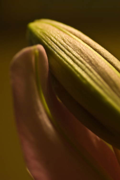 Nature photography, macros of flowers