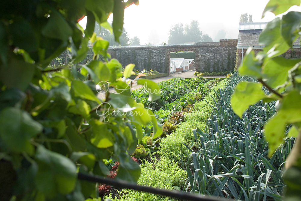View over vegetable beds including leeks and lettuce in the Vegetable Garden to the Frame Yard at West Dean Gardens, West Sussex, England