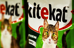 November 20, 2018 - Kiev, Ukraine - Kitekat Cat Food Pouches are seen at the store (Credit Image: © Igor Golovniov/SOPA Images via ZUMA Wire)