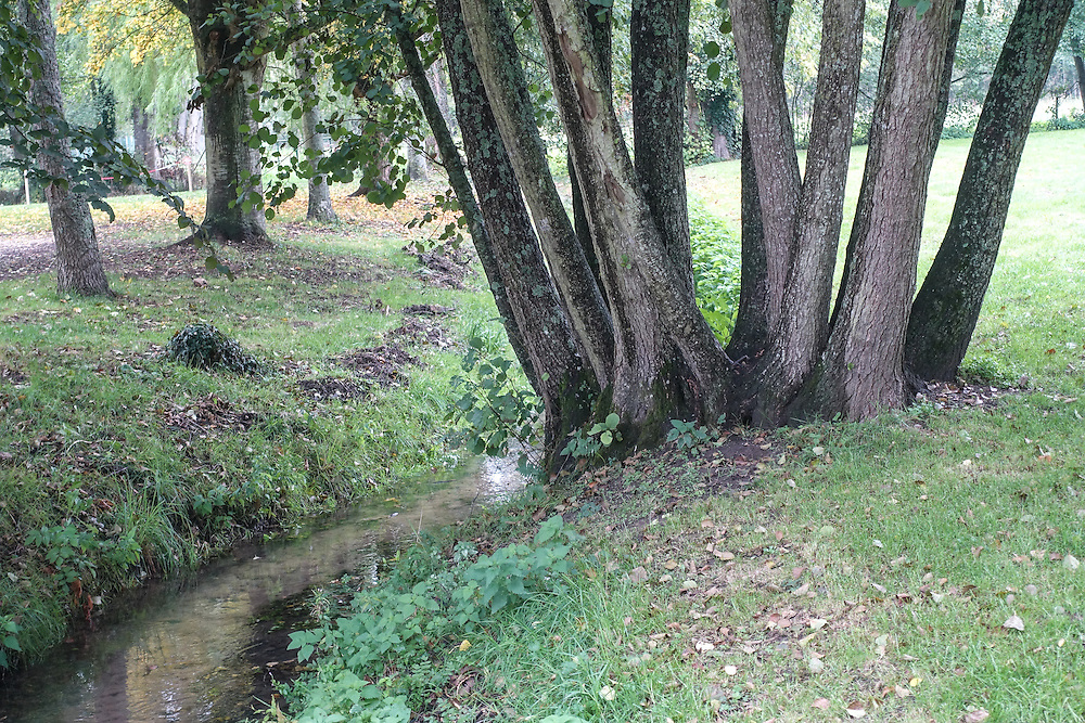 Trees line the shady green banks of a small winding stream.