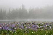 Meadow Mist