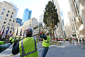 11/12/2016 Rockefeller Center Christmas  Tree Arrival