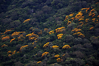 Yellow trees landscape