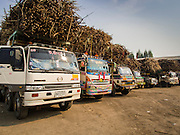 09 FEBRUARY 2015 - THA MAI, KANCHANABURI, THAILAND: Trucks loaded with sugarcane wait to get into a sugar mill in Tha Mai, Kanchanaburi. Thailand is the world's second leading sugar exporter after Brazil. The 2015 sugarcane harvest in Thailand is expected to fall about 5% compared to the 2014 harvest because of a continuing drought in Southeast Asia. Brazilian production is also expected to fall this year because of ongoing drought in Brazil. Australia, the number 3 sugar exporter, is also expected to see a smaller harvest this year because of continuing draught in Australia.   PHOTO BY JACK KURTZ