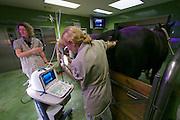 Vienna, Austria. Veterinärmedizinische Universität Wien (Vetmeduni Vienna).<br /> Reproductive ultrasonography at the Department/Clinic for Companion Animals and Horses (Department/Universitätsklinik für Nutztiere und öffentliches Gesundheitswesen in der Veterinärmedizin).
