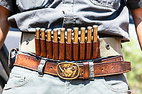 Ammunition belt with a black rhino buckle, Marataba Private Game Reserve, Limpopo, South Africa