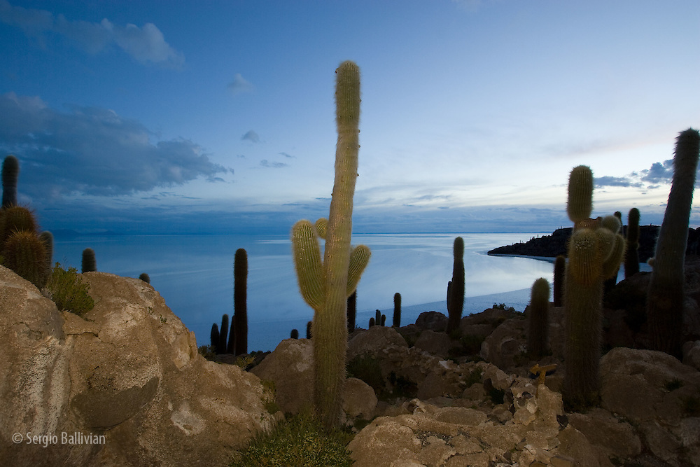 Islands and cacti in the middle of the Salar de Uyuni, Bolivia at dawn