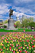 Tulips and George Washington statue at the Boston Public Garden, Boston, Massachusetts