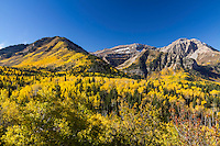 Mt. Timpanogos surrounded by golden aspens in the Fall along the Alping Loop in American Fork Canyon.