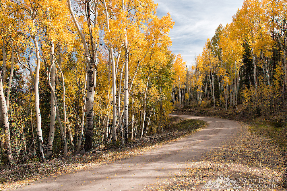 Fall colors on Forest Service Road 788 near Lake City, Colorado.