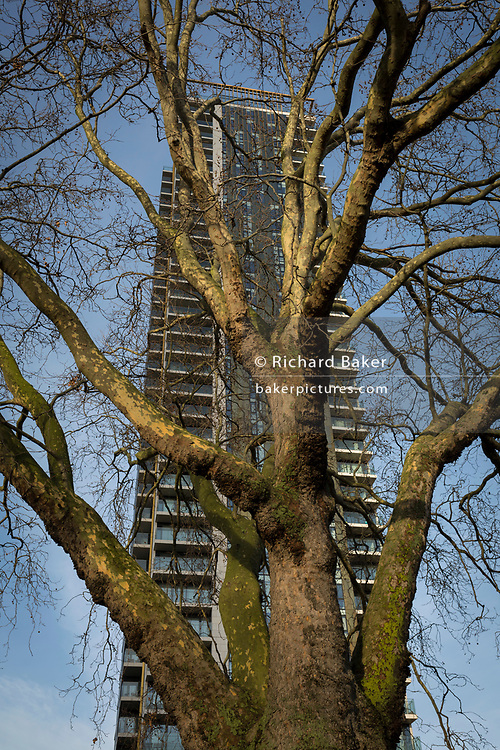 Winter branches of an urban plane tree and new apartments at Elephant & Castle in Southwark, on 7th December 2017, in London England.