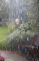 Rainy view out window into garden, Dublin, Ireland