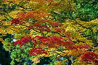 Japon, île de Honshu, région de Wakayama, Kumano Kodo, chemin du pelerinage, Koya San, Garan, temple bouddhique // Japan, Honshu, Wakayama, Kumano Kodo pilgrimage trail, Koya San, Garan, buddhist temple