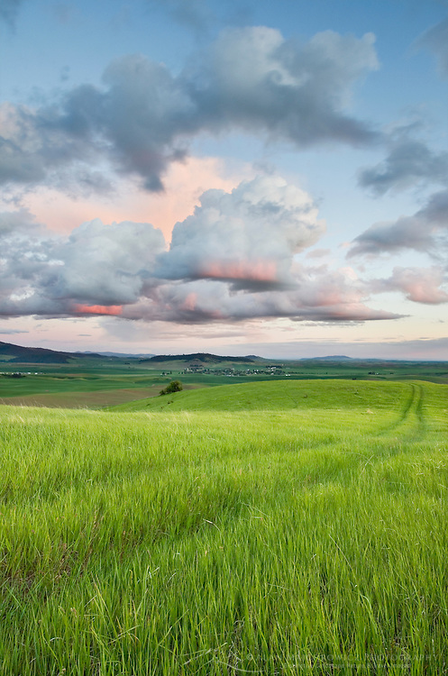 Clearing storm clouds in evening over a grassy meadow in the Palouse region of the Inland Empire of Washington