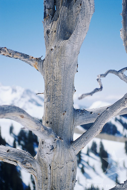 dead, weathered tree at top of The Canyons, looking down to Desolation Lake in winter