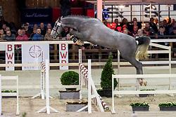 018, Relax vd Bisschop<br /> BWP Hengstenkeuring -  Lier 2020<br /> © Hippo Foto - Dirk Caremans<br />  17/01/2020