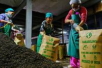 Inde, Bengale Occidental, Darjeeling, Makaibari Tea Estates Factory // India, West Bengal, Darjeeling, Makaibari Tea Estates Factory