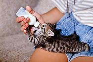 Bottle feeding kitten, <br /> MODEL RELEASED