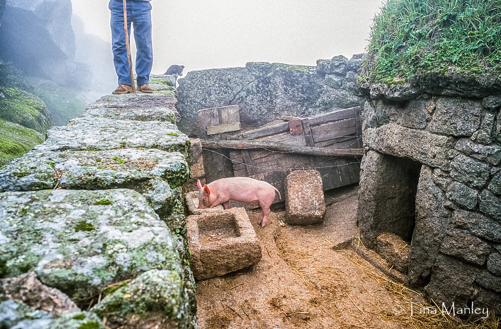 Pig farmer with dog in the fog in the stone village of Monsanto, Portugal.