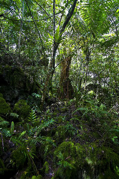 The Limestone forest and beach around the Asan Unit of the War in the Pacific National Historical Park