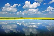 Clouds and canola reflected in wetland<br /> Wynyard<br /> Saskatchewan<br /> Canada