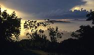 gorilla's in the mist, western Uganda