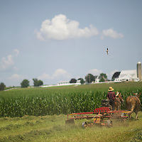 "An Amish man rakes an alfalfa field with his horse drawn tractor in Lancaster County, PA on August 9, 2014.  A bevy of Amish themed reality television shows (Amish Mafia, Breaking Amish, Return to Amish and Amish Haunting - to be televised soon) have prompted controversy over the negative portrayal.  One woman, a Mary Haverstick, a film maker, has launched a website in support of the Amish (respectamish.org) and has garnered the support of 3,000 businesses.  Her motivation to start the website was to ""end the bigoted programming.""  REUTERS/Mark Makela (UNITED STATES)"
