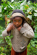 A portrait of a young Sherpa girl carrying a basket of leaves, Annapurna Sanctuary, Nepal