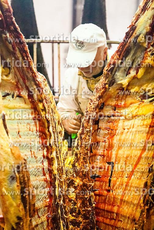 THEMENBILD, regionale Metzger im Fokus. Qualitaet statt Quantitaet, steht bei den meisten mittelstaendischen Fleischhauereien, bei ihren Fleischprodukten im Vordergrund. Mit viel Liebe vom Bauer aus der Region, werden Rinder, Kaelber und Kuehe, wie hier bei der Firma Moelltal Fleisch in Winklern, selbst geschlachtet und zu Qualitaetsprodukten weiterverarbeitet. Nur Schweinefleisch, das die Bauern des Tales nicht oder nicht zur Gaenze selbst produzieren koennen, wird von Vertragspartnern aus anderen Regionen Kaerntens zugekauft und mit Moelltaler Rezepten zu heimischen Spezialitaeten weiterverarbeitet. Im Bild Koerperlich anstrengende Handarbeit, mit einem Messer teilt ein Metzger das Vieh in zwei Haelften. Bild aufgenommen am 28.03.2012. EXPA Pictures © 2012, PhotoCredit: EXPA/ Juergen Feichter