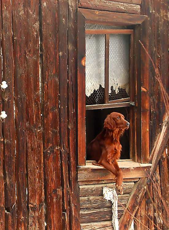 Brown dog outside a shack window at turkish countryside