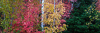 Fall colors across the board on display in Utah's Wasatch Mountains.