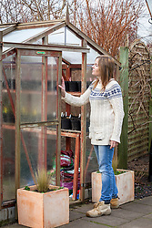 Opening a greenhouse door for ventilation in winter