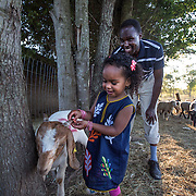 "DUMFRIES, VA - SEP12: Jude Elsanousi, 4, plays with goats and sheep at the Shah Farm in Dumfries, VA, September 12, 2016, as her father Mohamed look on. The animals  will be slaughtered in honor of Eid al-Adha, the ""Feast of the Sacrifice"". (Photo by Evelyn Hockstein/For The Washington Post)"