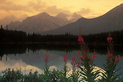 Canada, Banff, Alberta. Sunrise and fireweed at Lake Herbert. Credit as: © Josh Anon / Jaynes Gallery / DanitaDelimont.com