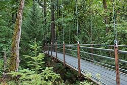 United States, Washington, Bellevue, Ravine Bridge at Bellevue Botanic Garden Bellevue Botanical Garden