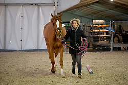 Verlooy Jos, BEL, Igor<br /> Jumping Mechelen 2018<br /> © Hippo Foto - Sharon Vandeput<br /> 27/12/18