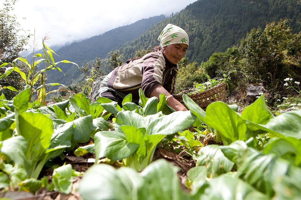 October 2009 WWF Everest / Imja Commission - en route Lukla to Phakding -  general landscape and  land use shot