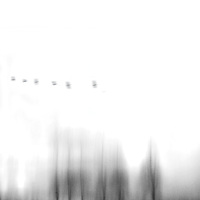 Six dark blurred trees and six birds flying through an empty white sky