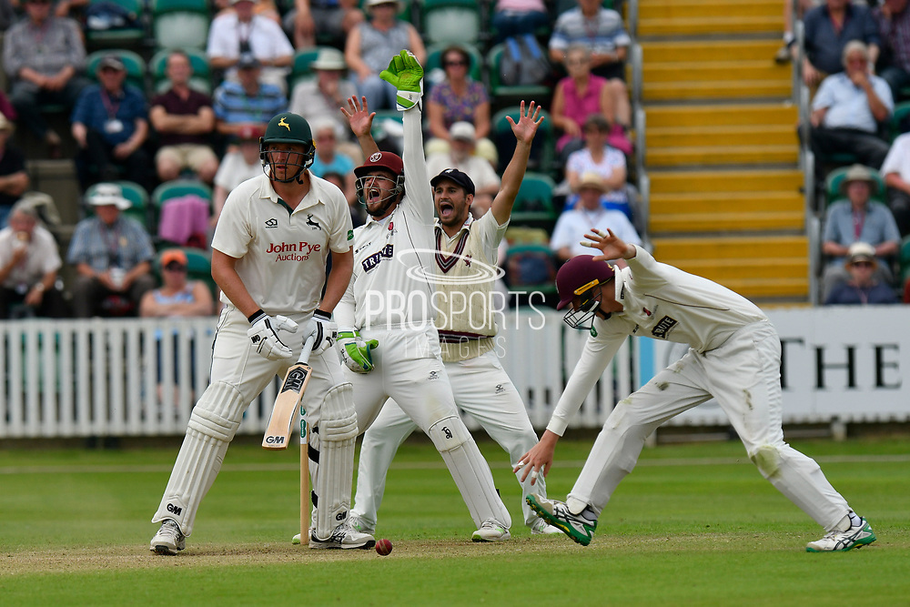 Wicket - Luke Fletcher of Nottinghamshire is given out LBW as the slips appeal during the Specsavers County Champ Div 1 match between Somerset County Cricket Club and Nottinghamshire County Cricket Club at the Cooper Associates County Ground, Taunton, United Kingdom on 10 June 2018. Picture by Graham Hunt.