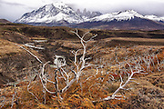 River from snow melt from Fritz Roy, Patagonia, and fall colors in the foreground.