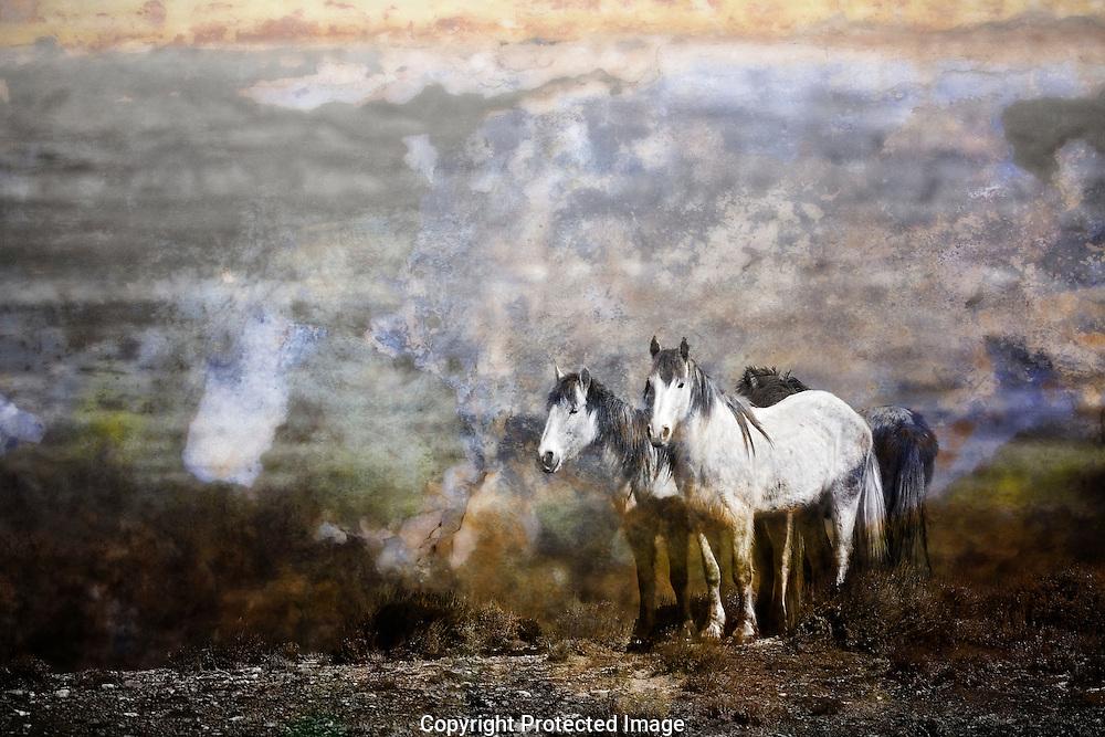 Wild horses of Sand Wash Basin.