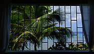 A palm tree and blue ocean horizon is framed by the barred windows of a house in Barbados