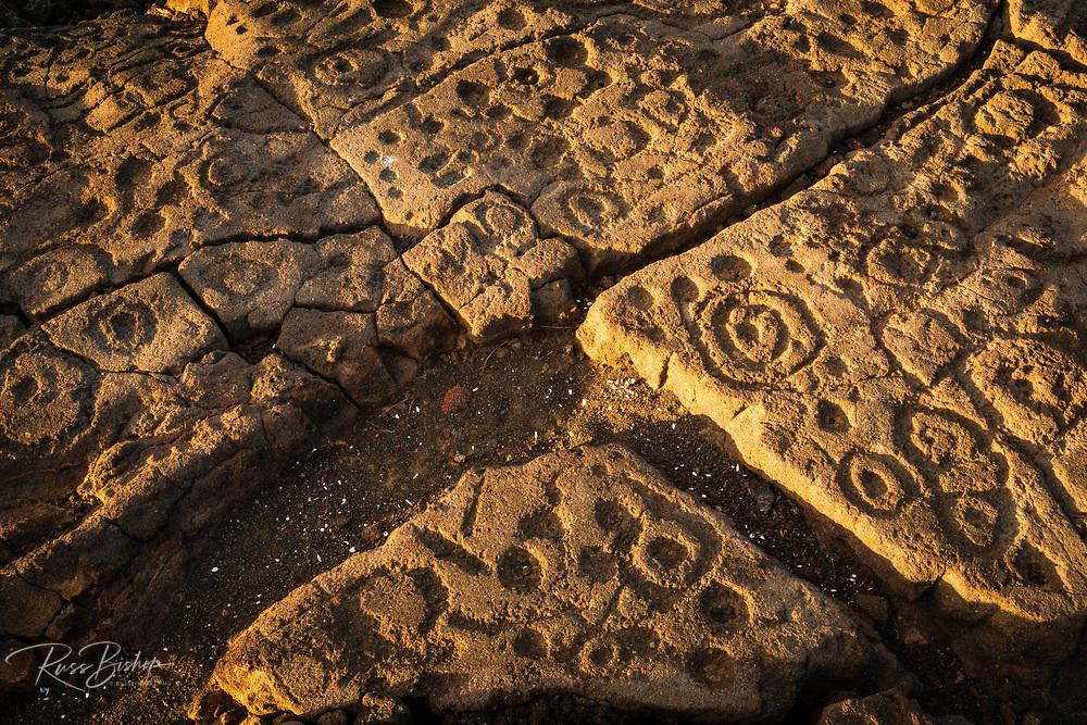 Hawaiian petroglyphs on the Mamalahoa Trail (Kings Trail), Waikoloa, Kohala Coast, The Big Island, Hawaii USA