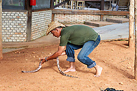 Guide picks up Red-tailed Boa (Boa constrictor), Jardim da Amazonia Lodge, Mato Grosso, Brazil Photo by: Peter Llewellyn