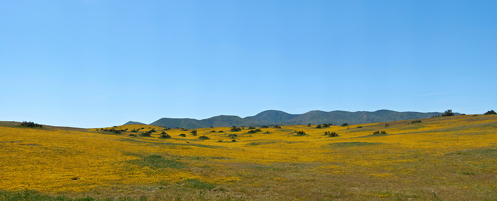 Northern CA Wildflowers (62686 x 25385 pixels)