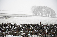 Snowcovered trees and field behind stone wall