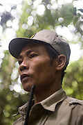 A ranger listens for movement in the forest whilst on patrol. The forest rangers are employed by the Ministry of Environment but sponsored by Flora and Fauna International who pays them 75% of their salary and provides training and accommodation. They undertake regular patrols in to the Samkos Wildlife Sancturary which is part of the Cardamom Mountains Nature Reserve looking for illegal activites such as logging, poaching, land encroachment and the production of the illegal substance sassafras oil. The Cardamom Mountains and surrounding forests is the largest and most pristine area of intact forest in SE Asia. Covering an area of 2.5 million acres it became one of the last strong holds of a retreating Khmer Rouge. Their presence helped preserve the forest as no-one dared to venture inside. But with the Khmer Rouge gone, it faces new dangers from poachers, loggers and illegal drug factories. In charge of protecting this vast forest are a handful of rangers who's job it is to track down and arrest those who are helping to destroy this delicate habitat.