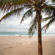 A palm tree, stands alone along the beach in the Ocean Park neighborhood of San Juan, Puerto Rico at dusk.  In the distance, a couple sit near the ocean shore.